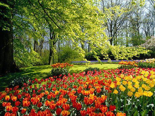Jardim Mágico Flower_image